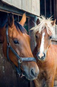 Horse_2
